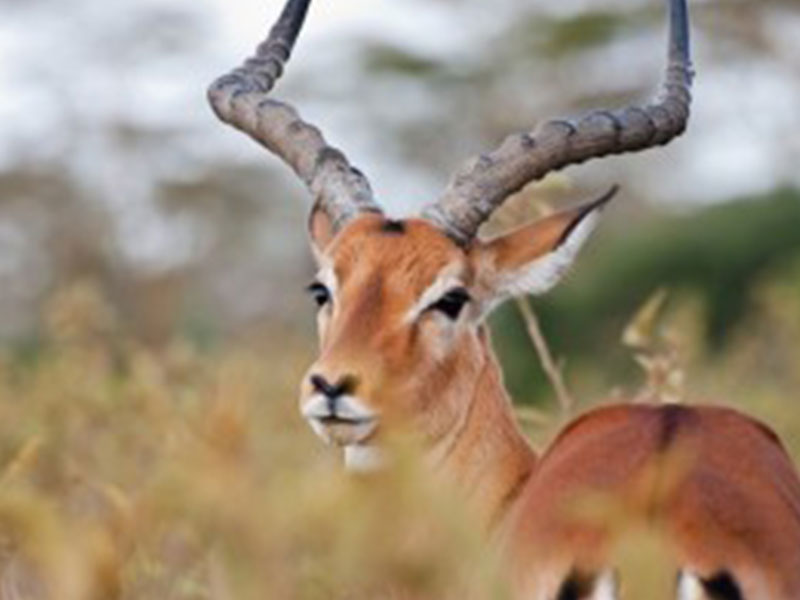 ANIMALS OF THE KRUGER NATIONAL PARK - photo#35