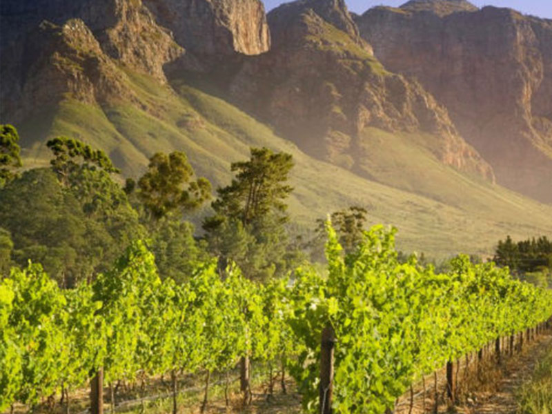 The Winelands