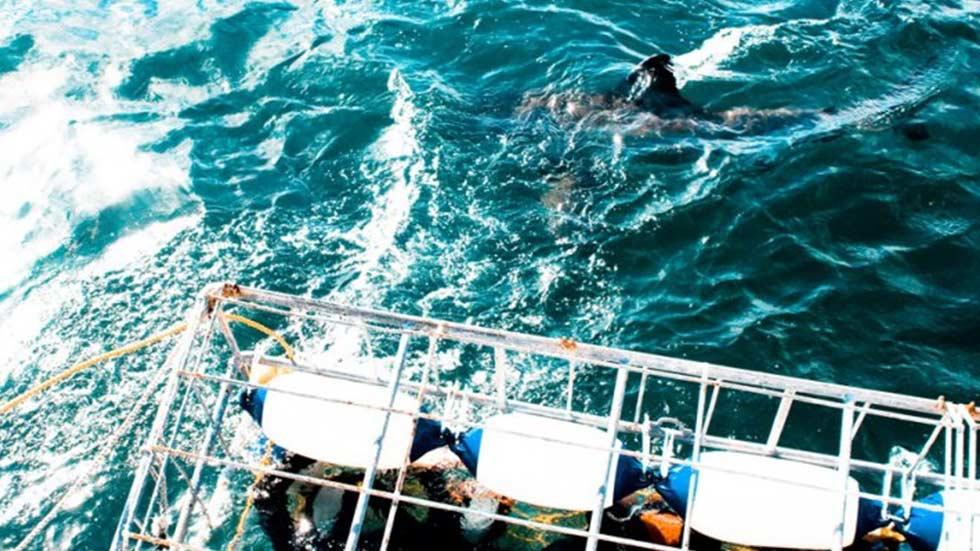 white-shark-slider4