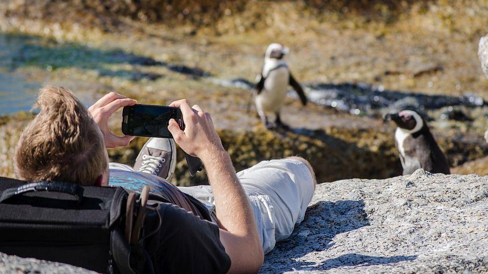 Penguin-at-boulders