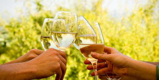 Wine Tasting Cape Winelands