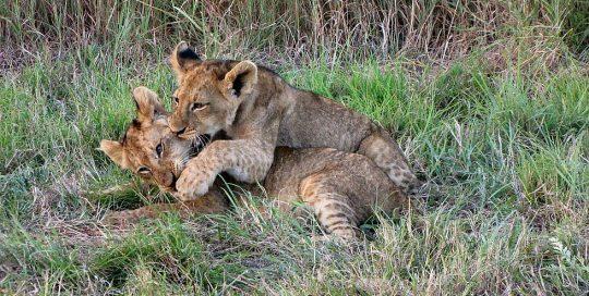 kruger park Kapama Safari