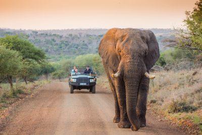 safari game drive elephant leopard mountain