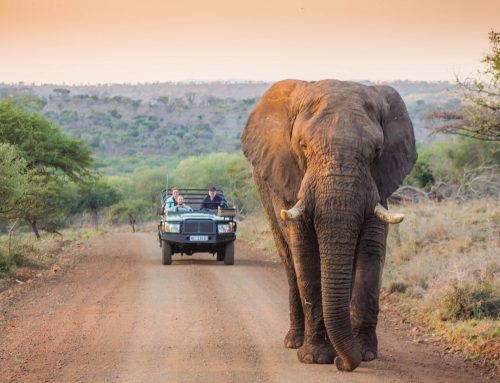 Kruger National Park VS Greater Kruger Park