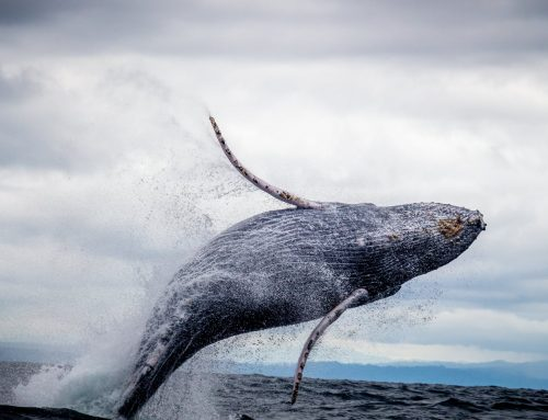Whales have arrived!